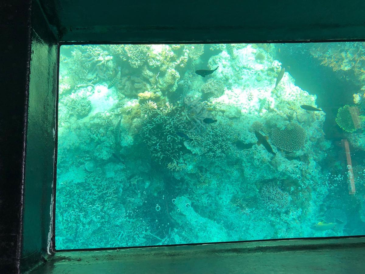 202105_coral.jpg